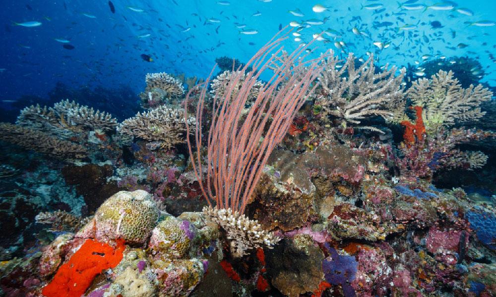 Reef at Six Senses Laamu, Maldives